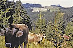 )Historie3-Waldweide