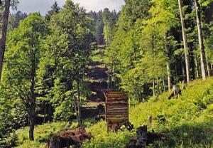 Schuss-Schneise in schwierig bejagbarem Bergwald